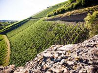 Eine Weinwanderung durch die Weinberge an der Nahe kann sehr informativ und erholsam sein.