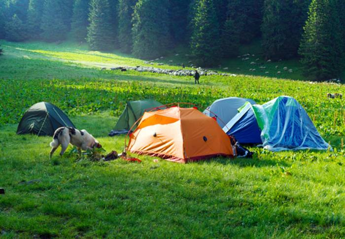 Auch auf dem Campingplatz fühlt sich unser Hund total wohl. (Foto: shutterstock - Roman Mikhailiuk)
