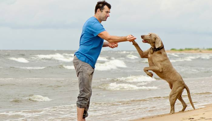 Ostseestrand ist Hundeland. (Foto: shutterstock - Tatjana Baibakova)